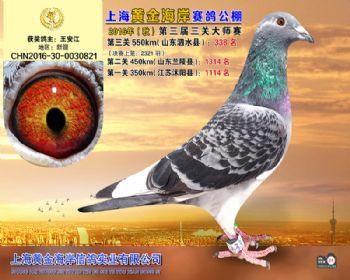 上海黄金海岸决赛第338名