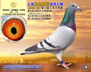 上海黄金海岸决赛第339名