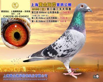 上海黄金海岸决赛第340名