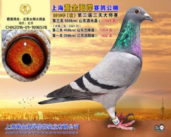 上海黄金海岸决赛第341名