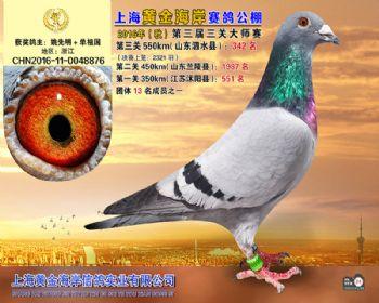上海黄金海岸决赛第342名