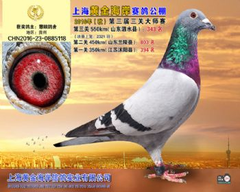 上海黄金海岸决赛第343名