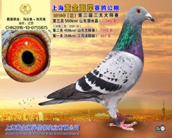 上海黄金海岸决赛第345名