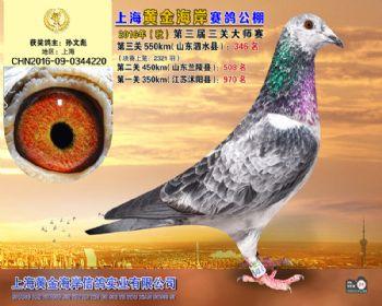 上海黄金海岸决赛第346名