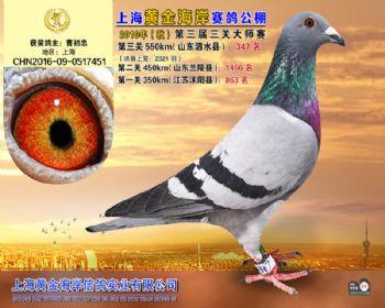 上海黄金海岸决赛第347名