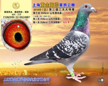 上海黄金海岸决赛第348名