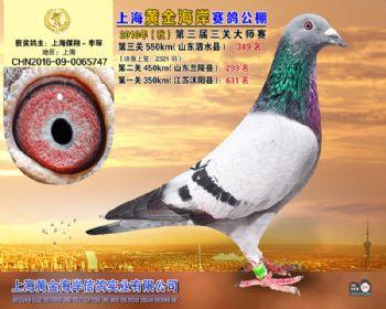 上海黄金海岸决赛第349名