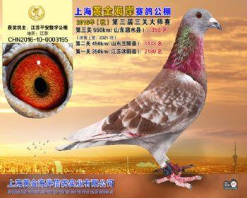 上海黄金海岸决赛第350名
