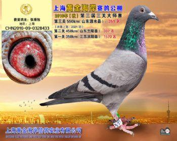 上海黄金海岸决赛第351名