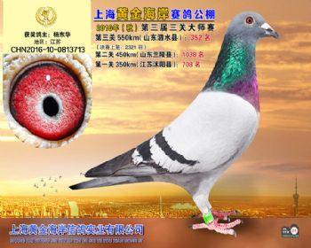 上海黄金海岸决赛第352名