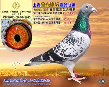 上海黄金海岸决赛第353名