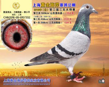 上海黄金海岸决赛第354名