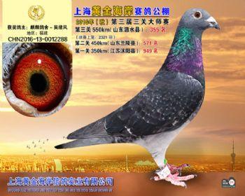 上海黄金海岸决赛第355名