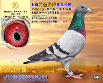 上海黄金海岸决赛第356名