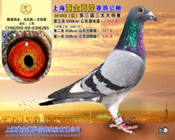 上海黄金海岸决赛第357名