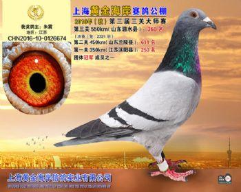上海黄金海岸决赛第360名