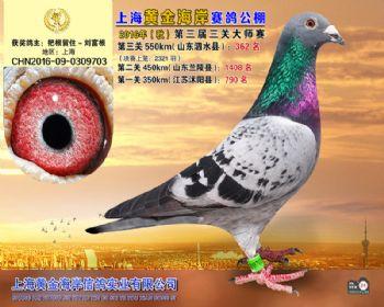 上海黄金海岸决赛第362名