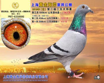 上海黄金海岸决赛第363名
