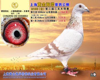 上海黄金海岸决赛第364名