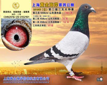 上海黄金海岸决赛第365名