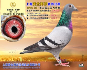 上海黄金海岸决赛第367名