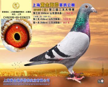 上海黄金海岸决赛第368名