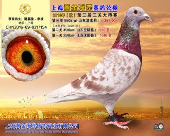 上海黄金海岸决赛第369名