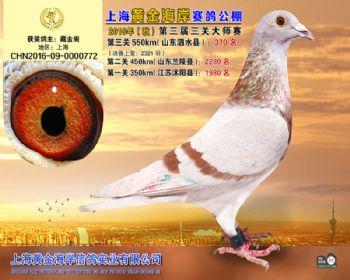上海黄金海岸决赛第370名
