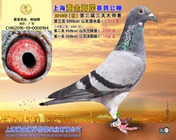 上海黄金海岸决赛第371名