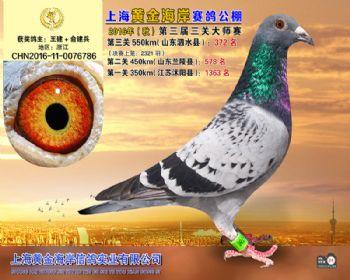 上海黄金海岸决赛第372名