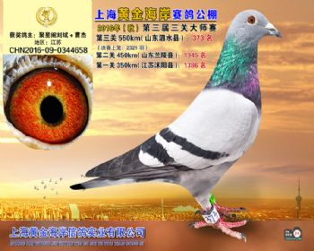 上海黄金海岸决赛第373名