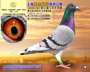 上海黄金海岸决赛第375名