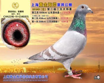 上海黄金海岸决赛第376名