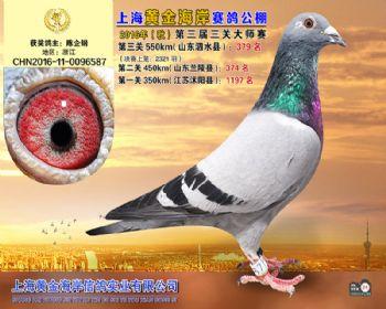 上海黄金海岸决赛第379名