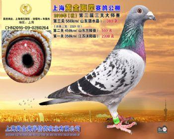 上海黄金海岸决赛第380名