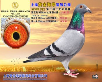 上海黄金海岸决赛第381名