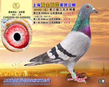 上海黄金海岸决赛第382名