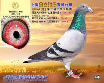 上海黄金海岸决赛第383名