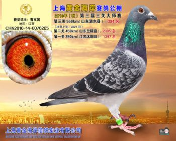 上海黄金海岸决赛第384名