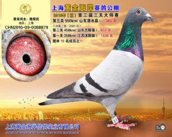 上海黄金海岸决赛第385名