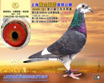 上海黄金海岸决赛第386名