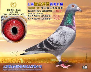 上海黄金海岸决赛第388名