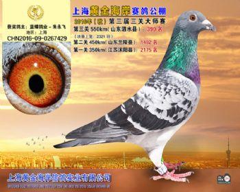 上海黄金海岸决赛第390名