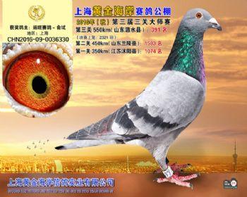 上海黄金海岸决赛第391名