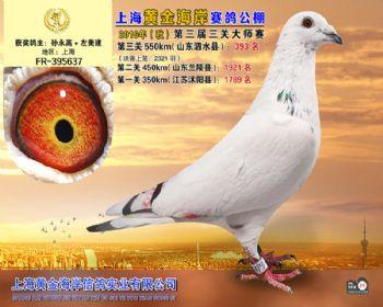 上海黄金海岸决赛第393名