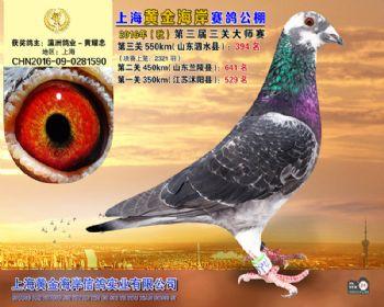上海黄金海岸决赛第394名