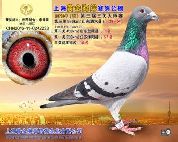 上海黄金海岸决赛第396名