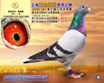 上海黄金海岸决赛第397名