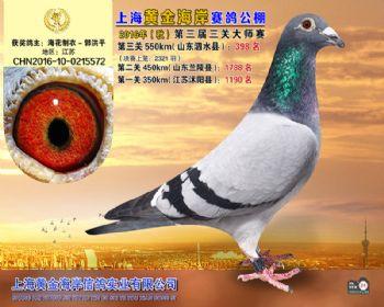 上海黄金海岸决赛第398名
