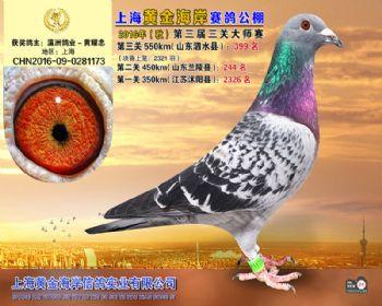 上海黄金海岸决赛第399名